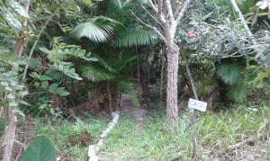 Deuxièmement, l'un partie de la ferme Araça, où est utilisé la méthode de la  permaculture. (Crédit photo: Fabio Santana).